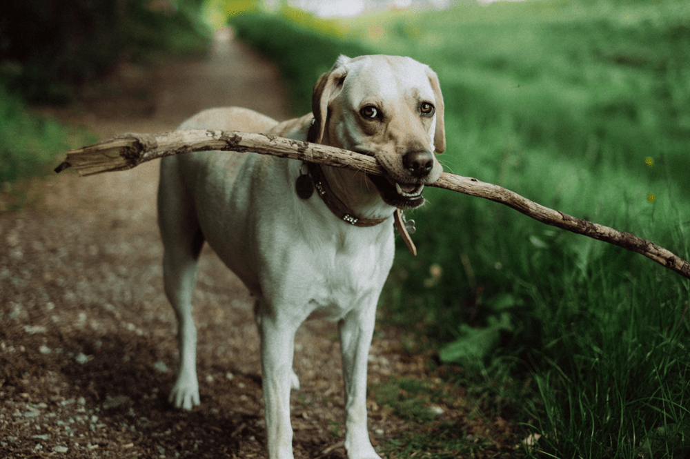 Getting exercise is important for our elderly dogs
