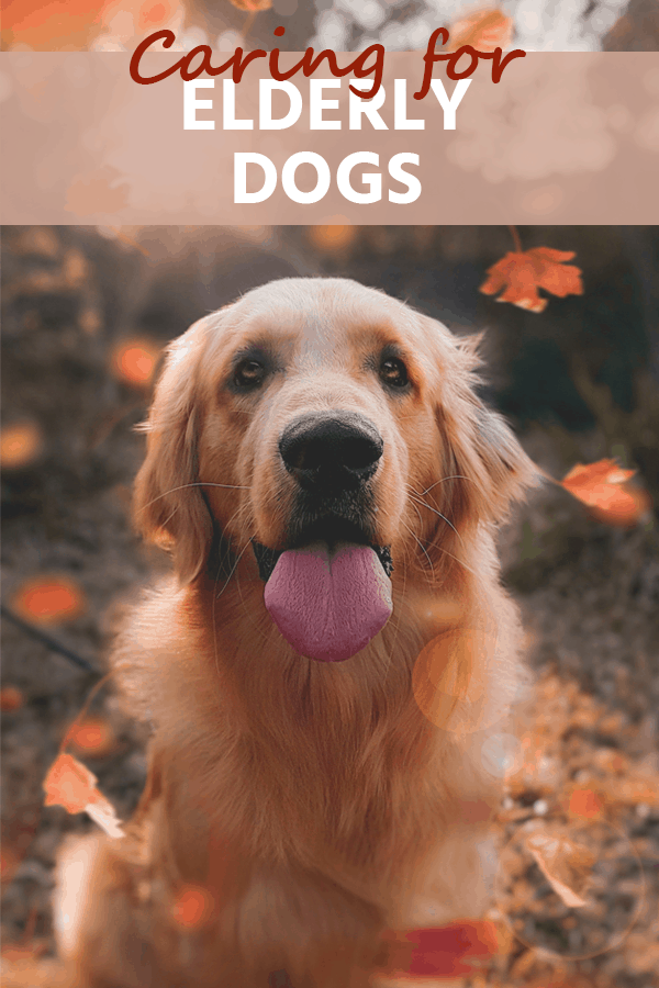 While witnessing the canine aging process can be difficult on pet owners, with proper treatment the lives of older pets can be extended. Listed here are tips for caring for elderly dogs.